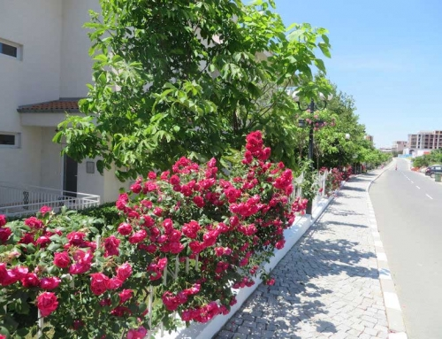 Dinevi Resort – flowers on street